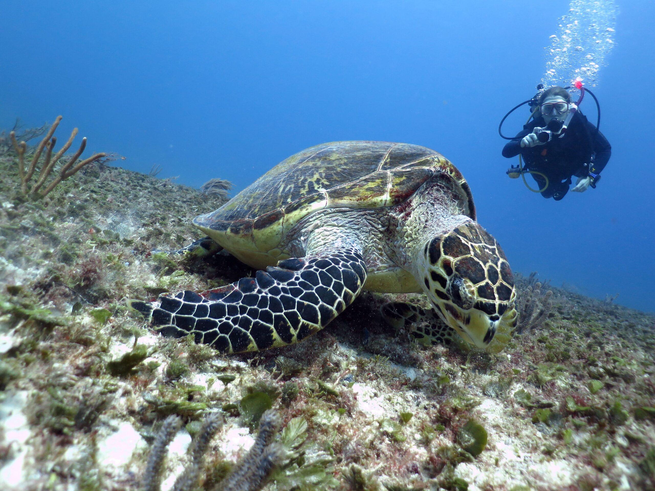scuba-discover-dive-tortle-reef-playa-del-carmen-mexico